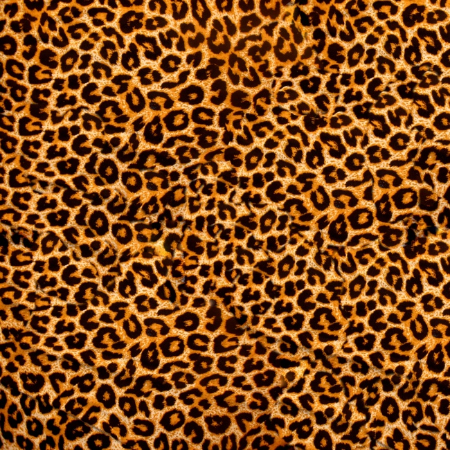 Leopard background pictures