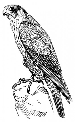 Peregrine Falcon Vector For Free Download Free Vector