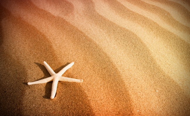 Starfish sand background pictures