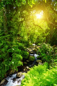 Forest stream high definition pictures