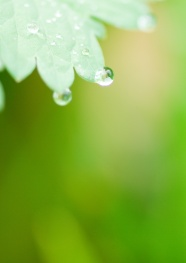 Green leaf drops a background picture